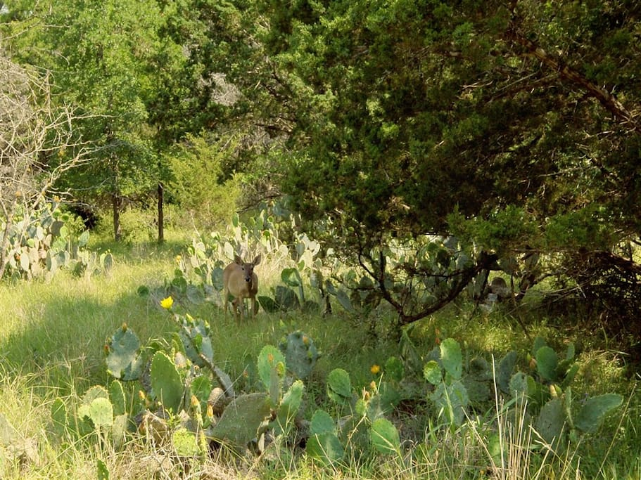 Beautiful Glimpses of Hill Country Wildlife