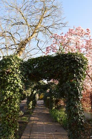 garden path to the yoga studio