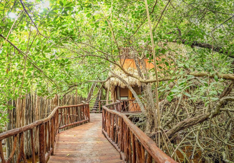 The walk to the treehouse