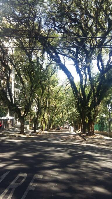 A rua com o título da Rua mais linda do mundo: https://pt.m.wikipedia.org/wiki/Rua_Gon%C3%A7alo_de_Carvalho