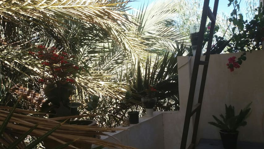 ur entrance to the house is surrounded with only Palm trees, blue sky, flowers and some singing birds