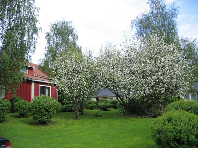 Huoneet omenapuiden katveessa.