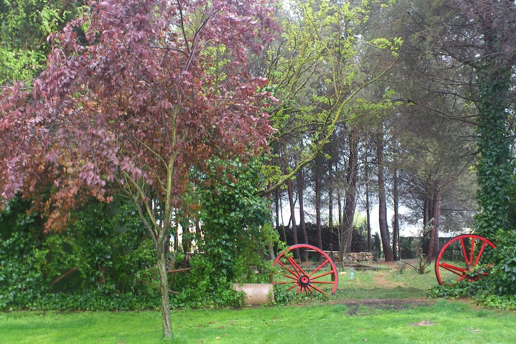 Jardín con pinada privada.