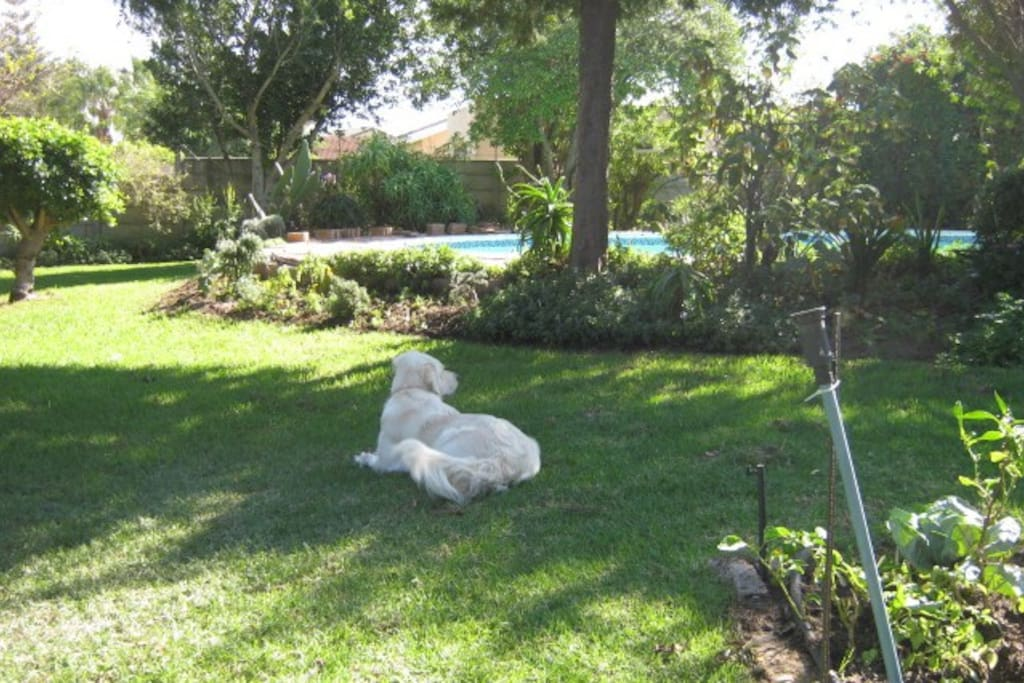 Relax  and enjoy the birdsong in our well established garden. Our three adorable dogs will entertain you.