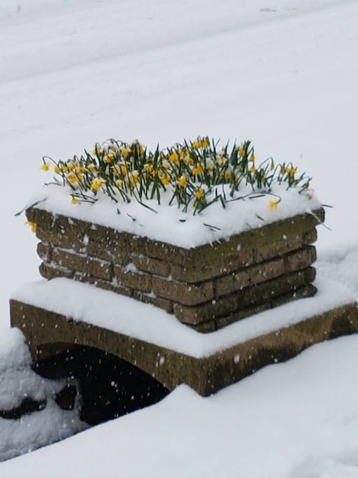 March 1st 2018 - First day of spring