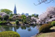 Shinjuku-gyoen is well maintained park by government that you can enjoy a fusion of city & nature