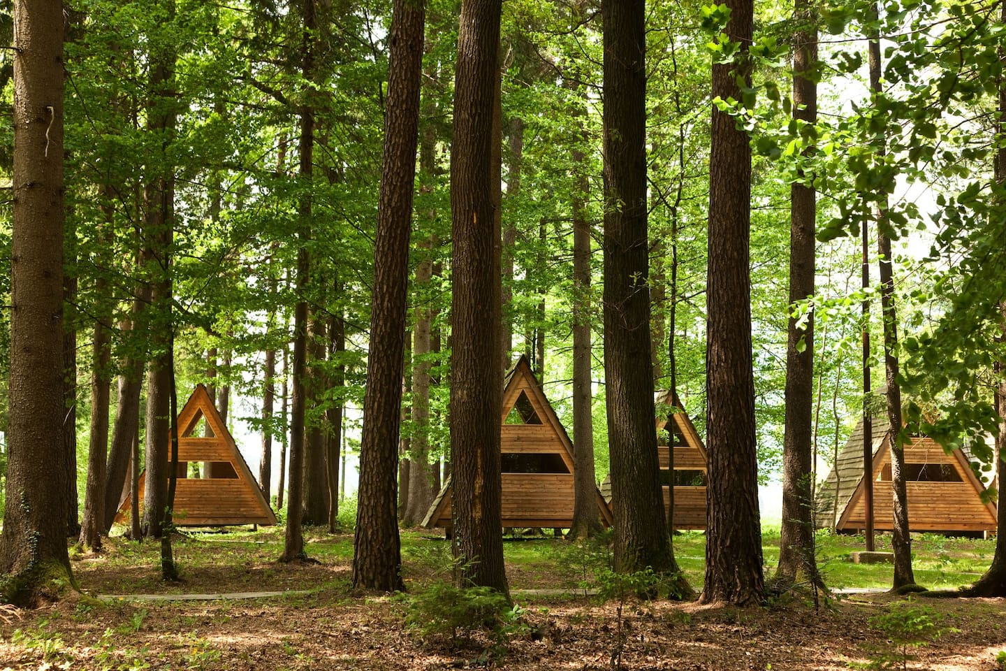 Our 'Forest bed' Huts