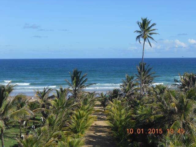 Uma área verde sendo um paraíso tropical