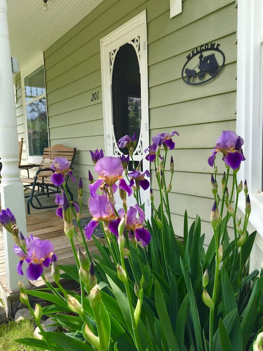 Beautiful Blooming Iris front porch