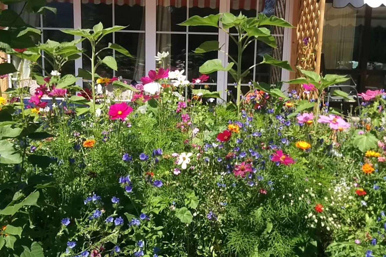 Das App von der BlumenWiese aus
