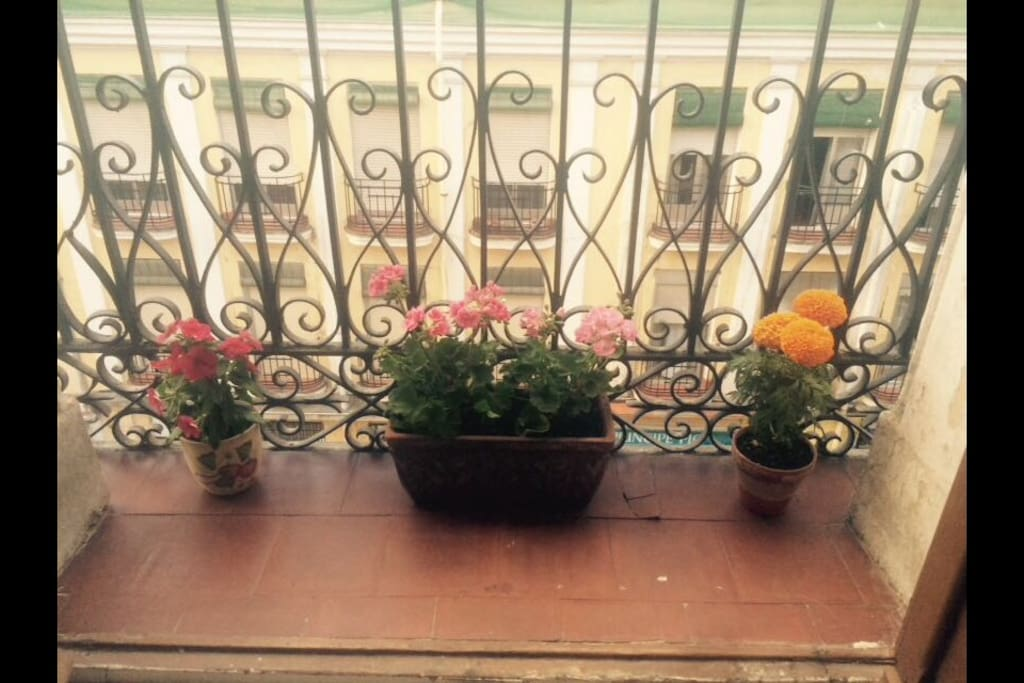 These flowers in your balcony are only on duty in spring :-)