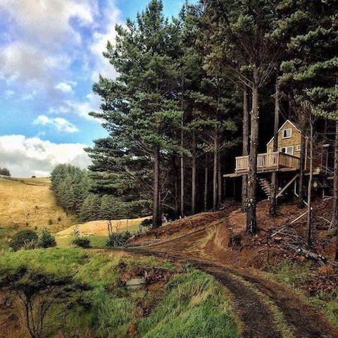 Raglan Treehouse in the Woods