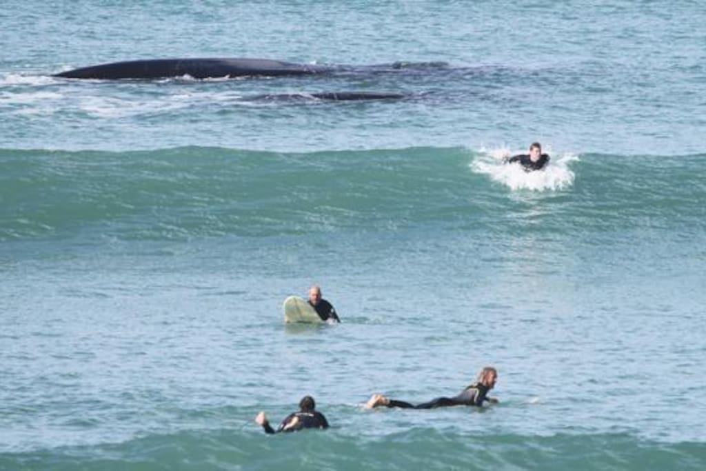 friends can drop in while surfing at Middleton point (i.e. some whales!!)