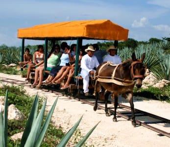 Vive un delicioso viaje en el pasado (aún vivo) - Mérida - Zomerhuis/Cottage