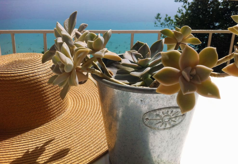 cactus & hat at the balcony