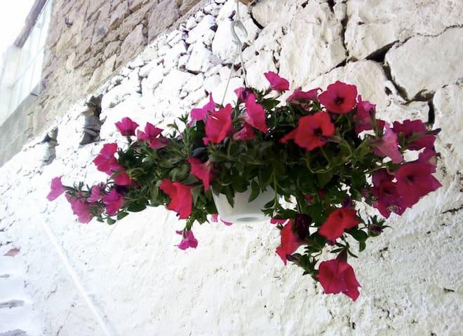 Domus Mea nel cuore della Sardegna - Busachi - Hus