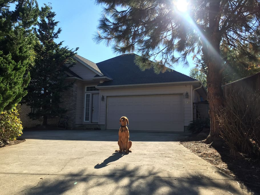 """The front of our lovely, newer-built house with Roo the friendly greeter! Be aware of hugs and tons of vizsla love from this kind """"guard-dog"""" :)"""