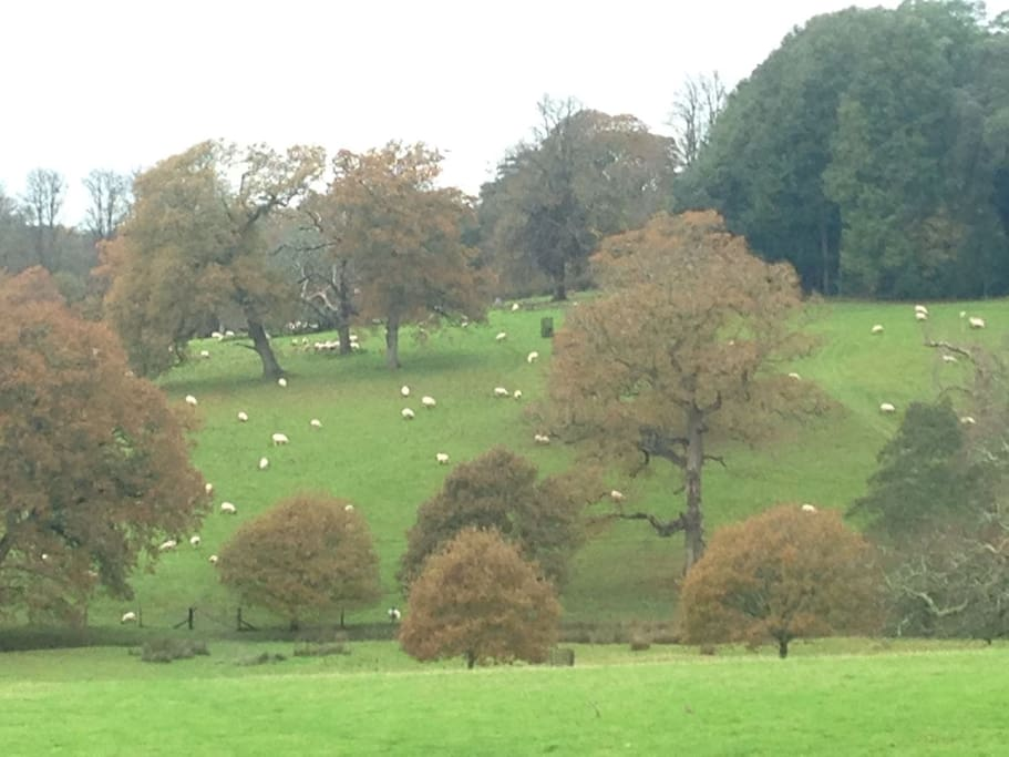 View of sheep grazing on the Tregrehan estate from outside Bluegates Barn