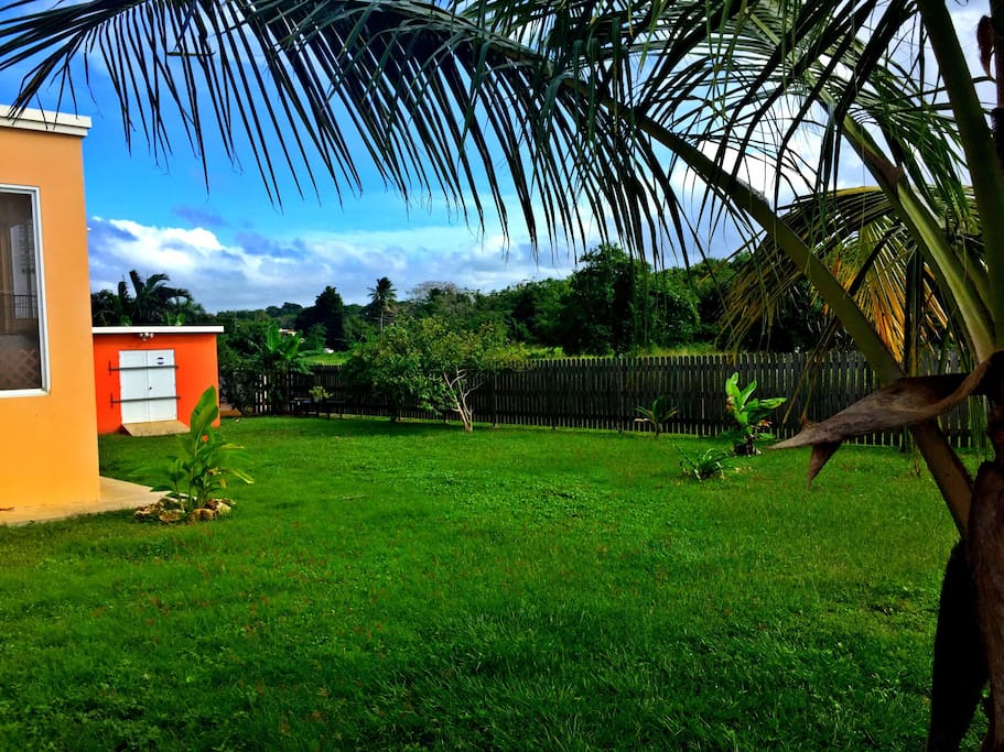 Backyard, fenced in, safe place for kids to run around, enjoy fruit trees, perfect for events/activities