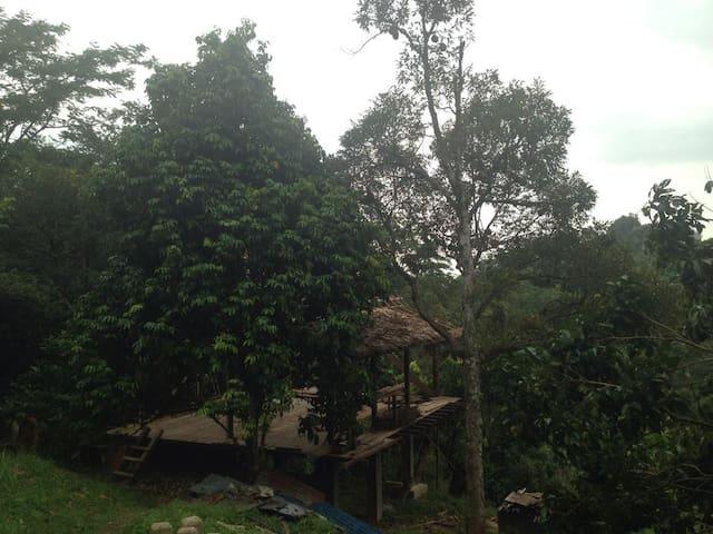 Camp retreat with breakfast - MY - Casa na árvore