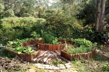 Horta orgânica !