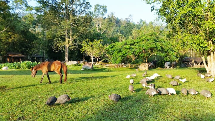 Chiangmai Farmstay 3 nights package (H.1)