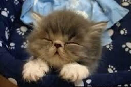 Sleepy Kitten test %FAKE% - Jordan Valley