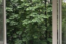 Уютная однушка с окнами на парк