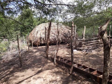 Ecoaldea Panzenú en Bolívar San Pedro Consolado