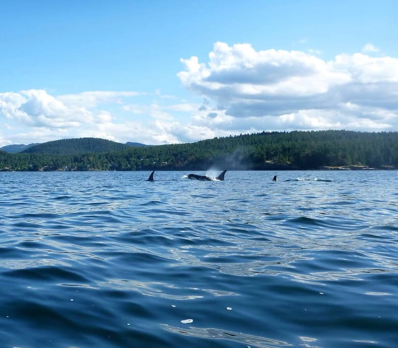 If you are lucky you will see Orcas