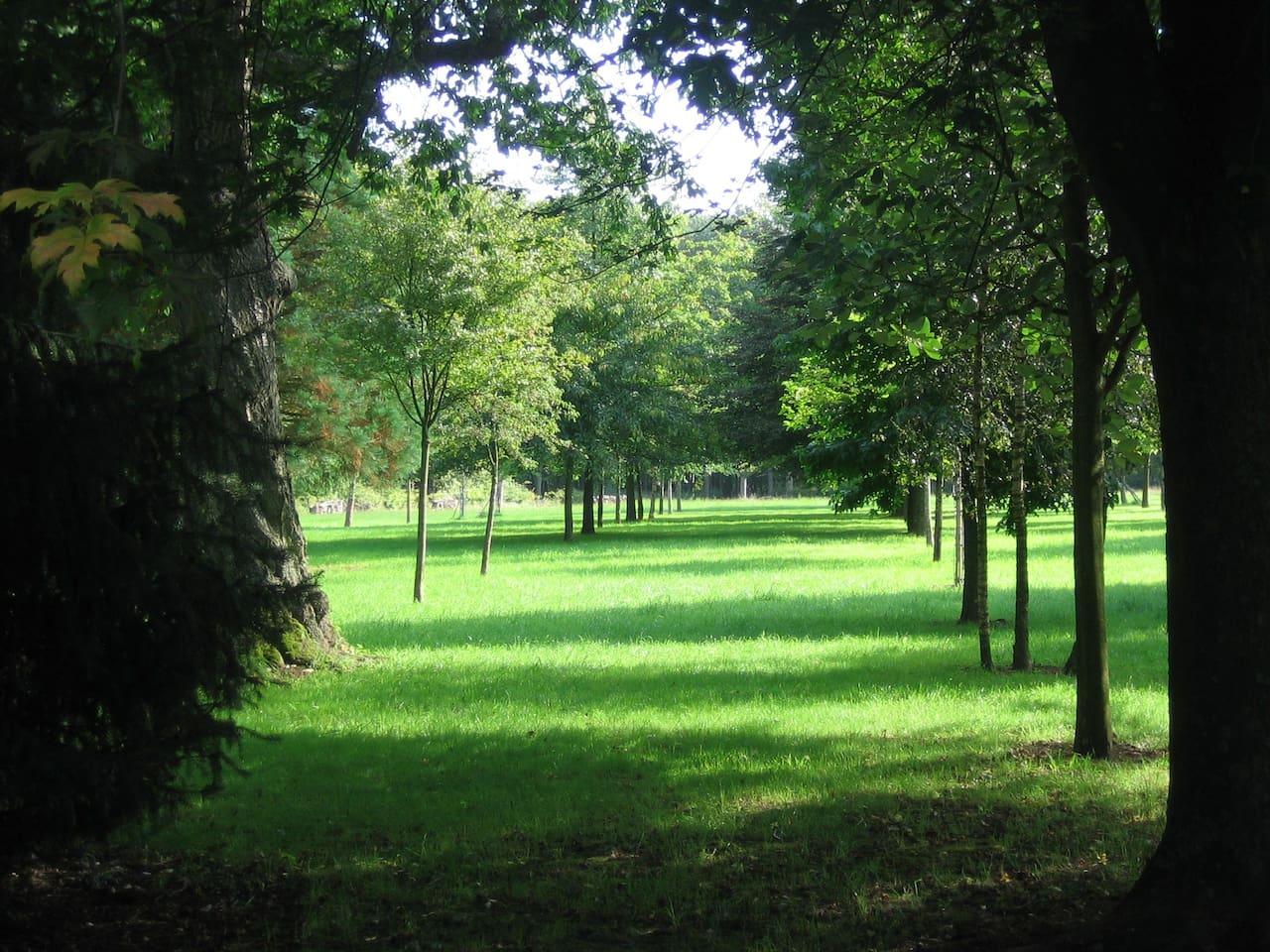Vue sur le parc arboré de 2 hectares. La forêt de Mormal est juste au fond du pré.