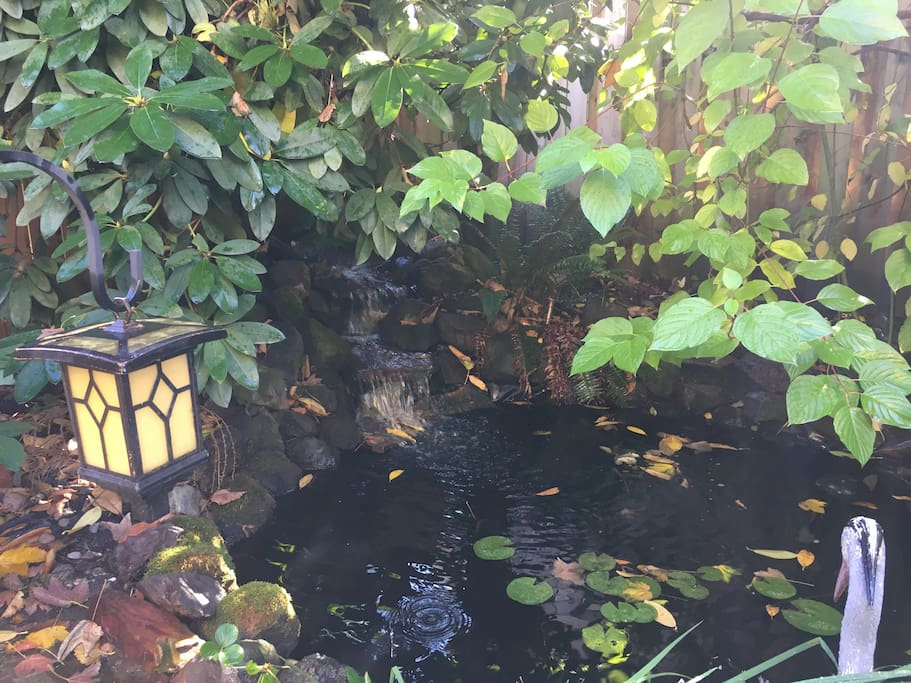Pond and waterfall in the back with peaceful water sounds on summer nights
