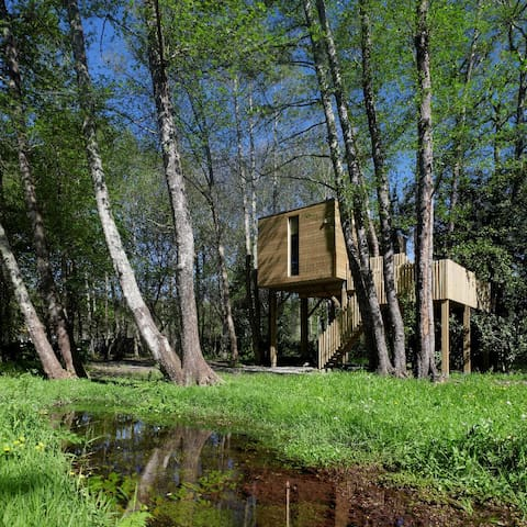 森のキャビンは、純粋な自然を共有する