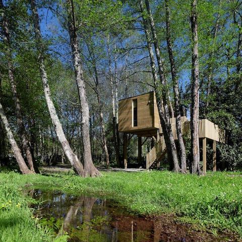 Tree house - Cabaña de Arturo
