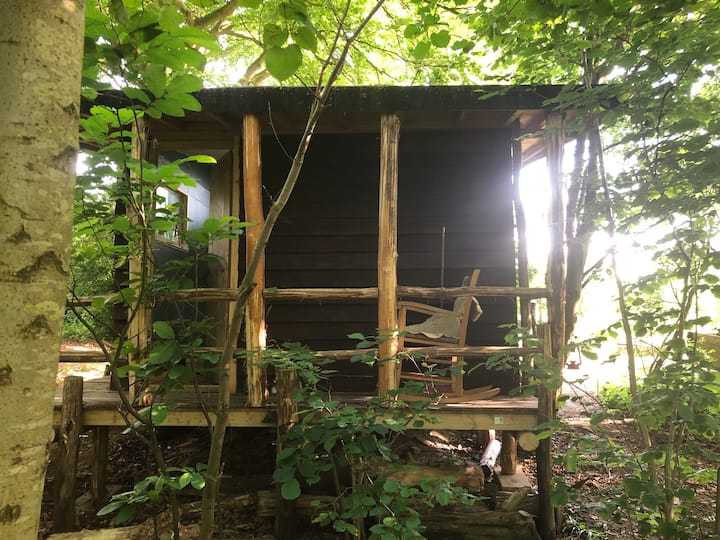 Wendy's house Woodland cabin