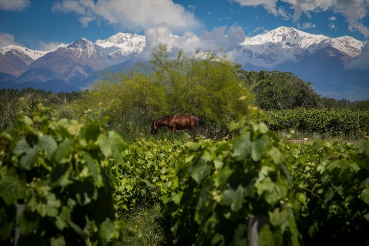 Our view, a mix of vines & mountains.