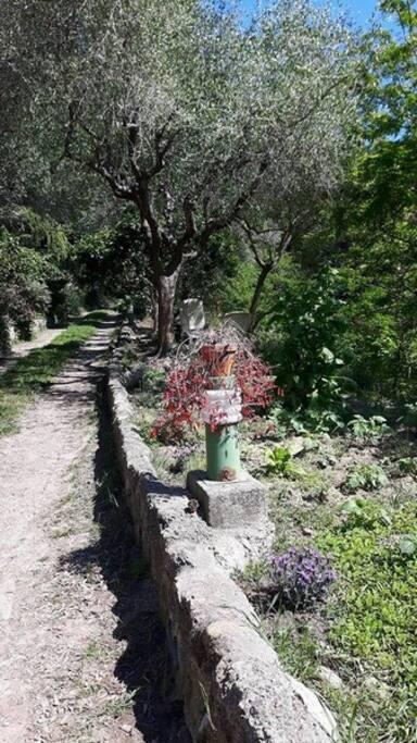 Une propriété de famille où on cultive l'olive et le citron