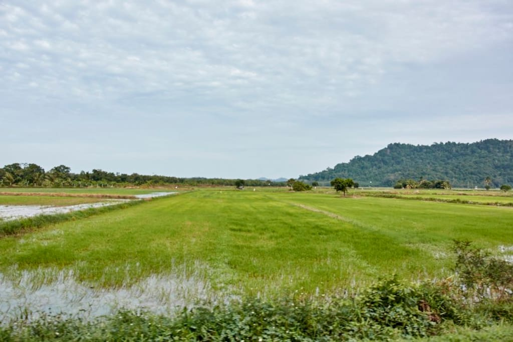 Rice Paddy - 5 mins walk
