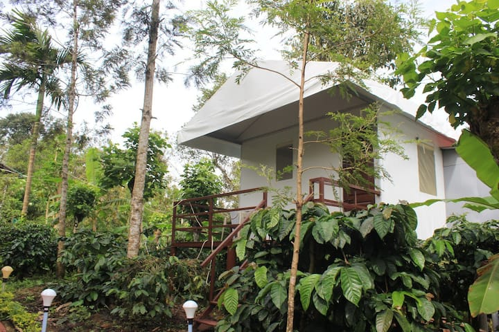 Coorg Tent House -1