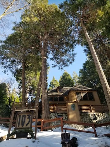 The Bunkhouse sits amidst tall pines giving a treehouse feel when inside the cabin