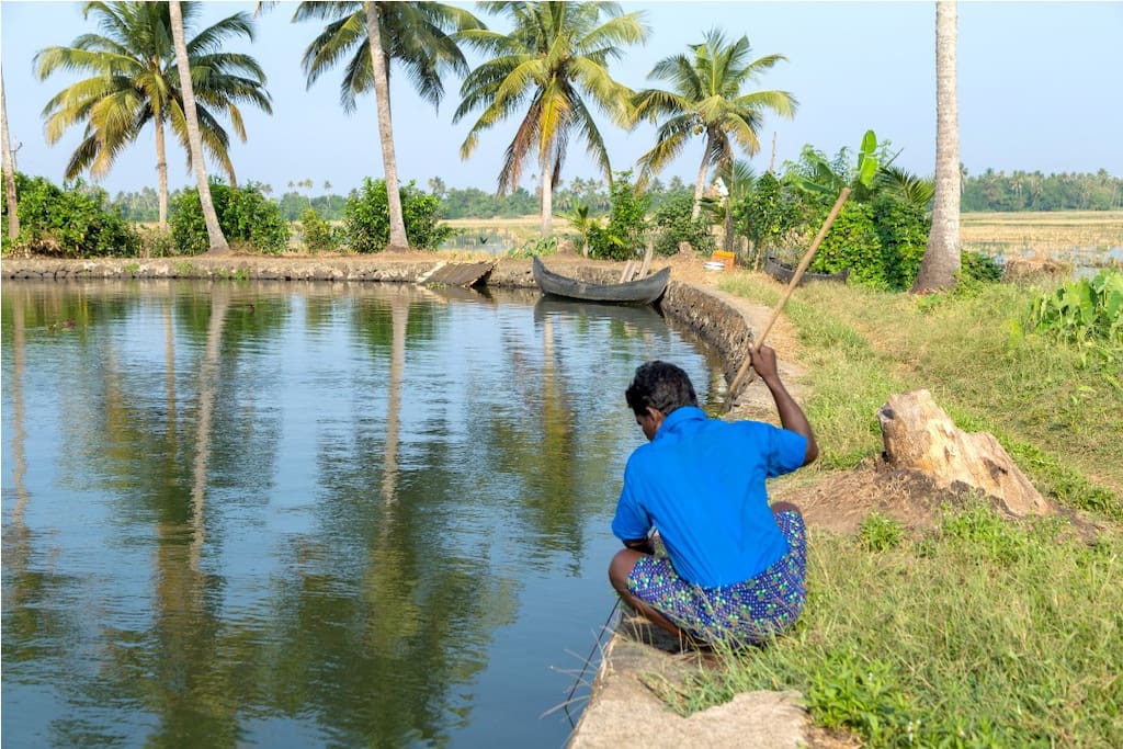 Catch Karimeen Fish from Vembanad Lake