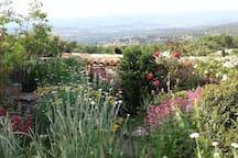 Un petit tour du jardin