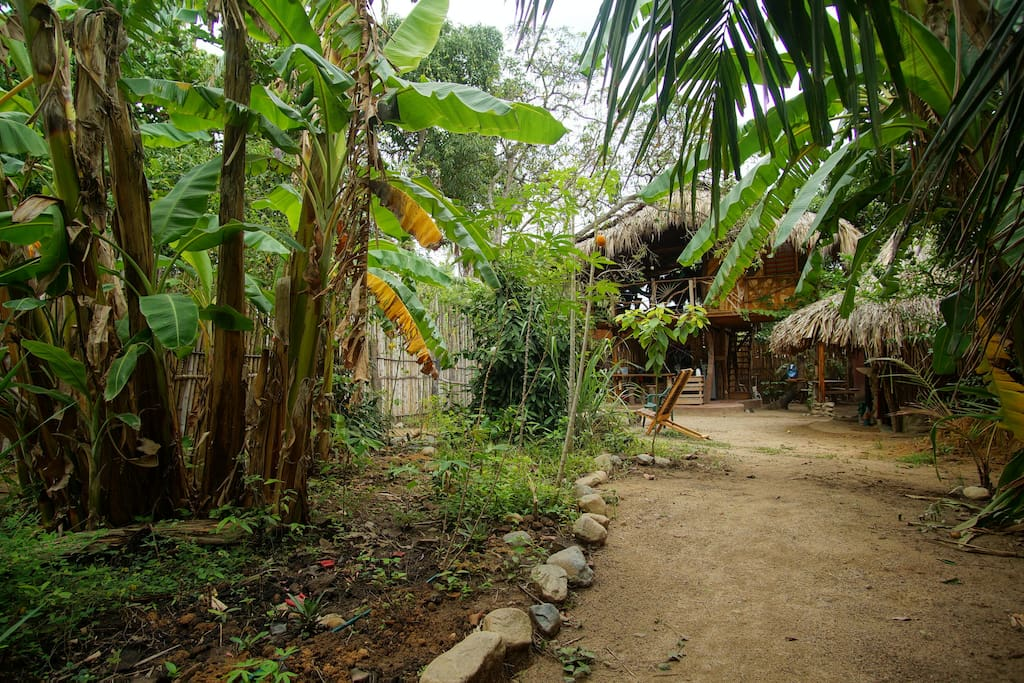 Bananatree in the Mango Village
