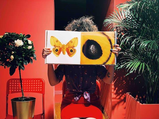 洋鳥消夏館_merry 2-蝴蝶標本·火車站·卓展·地鐵站·市中心