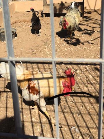 La piccola fattoria degli animali