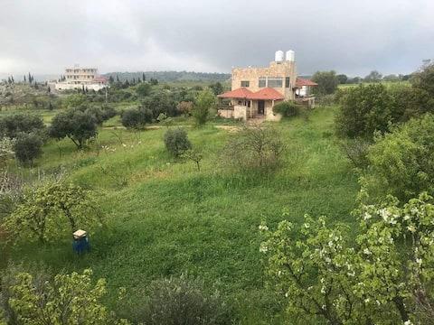 自然の中の美しい家