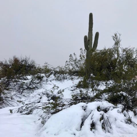 Miracles Happen, Snow in PHX