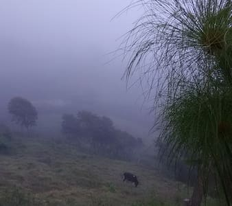 Estancia entre Bosque y Neblina