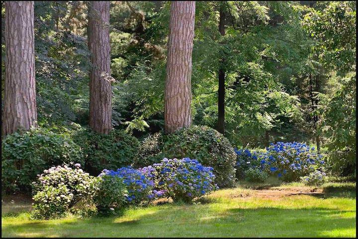 Hortensien im Schlosspark