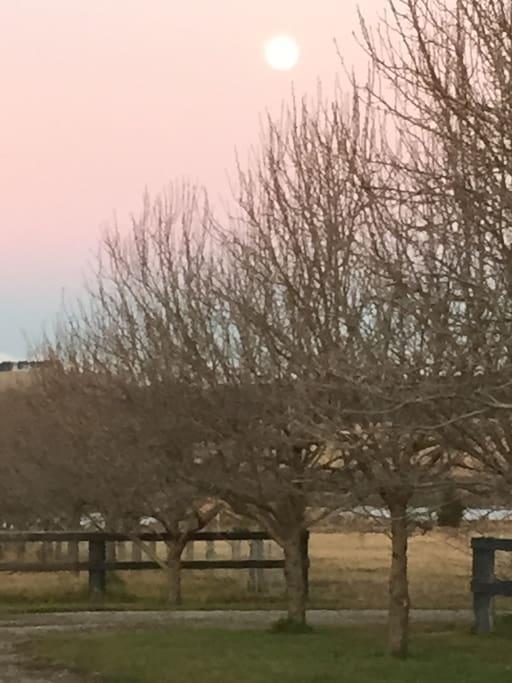 Moonrise in Winter.